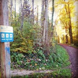 ...an einem Herbsttag durch den sonnendurchfluteten Wald zu joggen.