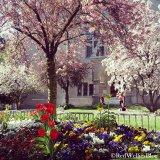 ...die Farbe des Frühlings.