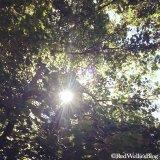 ...den Blick in den Himmel richten und ... durchatmen.